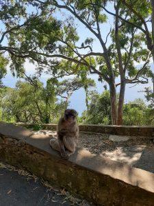 Gibraltar mit Kindern - ein besonderer Familienausflug zu freilebenden Affen - Familiengarten