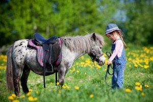 Wer ist eigentlich diese Gesellschaft - ein Plädoyer für mehr Ponyhof im Leben - Familiengarten